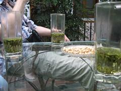 Chengdu Tea Gardens (JING Tea) Tags: tea teaceremony teahouse teaservice
