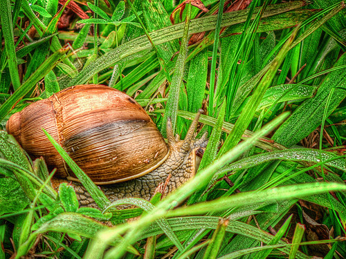 Caracol | HDR