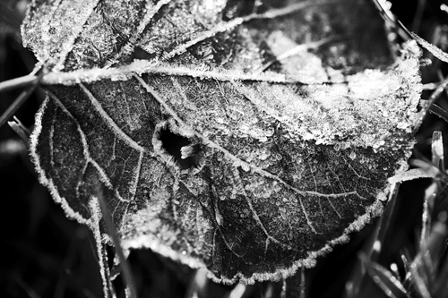 feb1009frost_1flickr