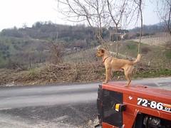 cane 1 (Santa Lucia, Veneto, Italy) Photo