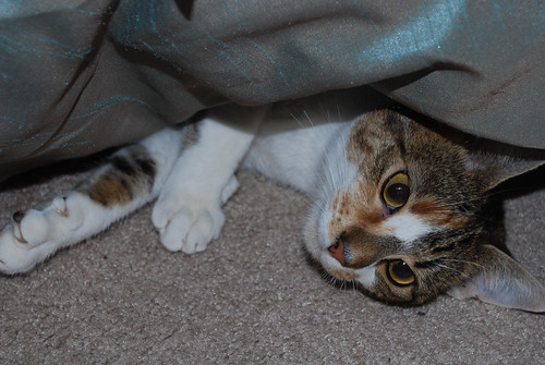 callie under the bed