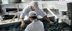 Vinos argentinos finos y baratos, una ganga para EE.UU. y Europa