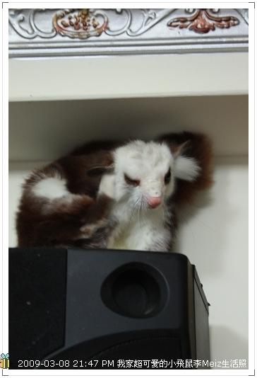 09年二三月小飛鼠Meiz生活照 (7)