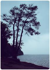 Italia (YYNTL) Tags: morning italien wallpaper italy mist lake tree water found meer italia unfound boom uitzicht italie lazio bracciano latium lagodibracciano