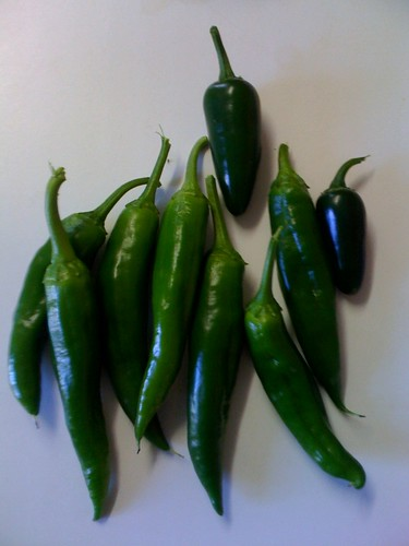 Chillies that we grew
