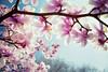 Magnolia (Jörg Wanderer Photography) Tags: pink flower nature topf25 colors germany geotagged deutschland petals spring topf50 colours bloom magnolia canon5d düsseldorf topf100 topf200 springtime frühling blooming magnoliatree magnolien topf400 kaiserswerth canon2470 magnolienbaum geo:lat=51298157 geo:lon=6744843 robertsartgallery