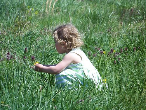 Q in a field