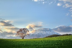 (The One Cherry Tree) (jasohill) Tags: desktop windows sunset mountain tree nature japan clouds cherry landscape photography 350d japanese one blog spring background may iwate canon350d backgrounds   sakura 24 mm   matsuri  2009 tohoku f28 ef hdr  koiwai jasonhill touhoku  shizukuishi  bokujo    jasohill superaplus aplusphoto canonef24mmf28 tumblr theperfectphotographer windows7  fotocompetitionbronze fotocompetitionsilver fotocompetitiongold japanblogmatsurimay2009 aboveandbeyondlevel1