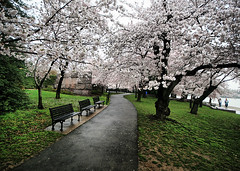 Blossoms at the FDR Memorial (` Toshio ') Tags: pink flowers people flower tree water grass bench cherry washingtondc dc washington petals districtofcolumbia memorial branch artistic path branches blossoms perspective wideangle tourists sidewalk cherryblossoms hdr fdrmemorial tidalbasin cherryblossomfestival toshio franklindelanoroosevelt highdynamicresolution superaplus aplusphoto platinumheartaward