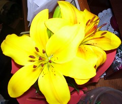 Mother's Day Lily