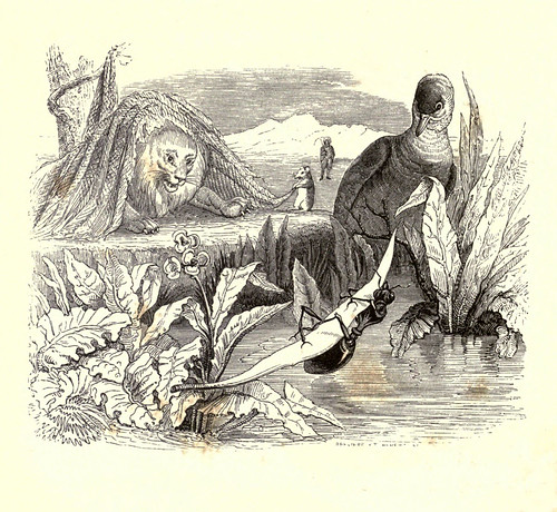 009- La paloma y la hormiga-Fabulas La Fontaine-J.Grandville