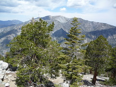View of Mt Baldy Photo