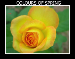 Colours of spring (Nasir Iftikhar) Tags: autofocus hiddentreasure beautysecret thegalaxy mywinners abigfave colorphotoaward impressedbeauty theunforgettablepictures picturefantastic macromarvels betterthangood theperfectphotographer goldstaraward qualitypixels peachofashot awesomeblosssoms mallmixstaraward realgem mmmilikeit absolutelyperrrfect flickrstruereflection1 rememberthatmomentlevel1 rememberthatmomemt1