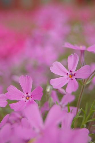 Pretty flowers :)