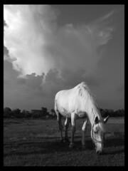Two Pigeons (Dushan B. Hadnadjev [slowly back]) Tags: life light portrait sky people horse village time spirit serbia soul balkans oldfarm srbija  dushan  updatecollection