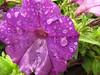 Georgeson Botanical Garden-2