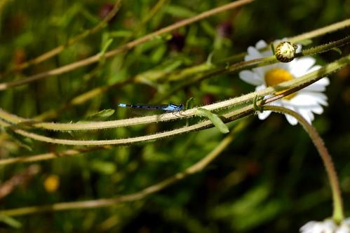 flowermeadow6