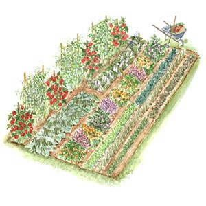 ss_vegetable_garden