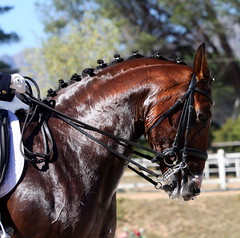Balmoral (neulands) Tags: horses cheval championship pferde stellenbosch balmoral 2010 dressage intermediare