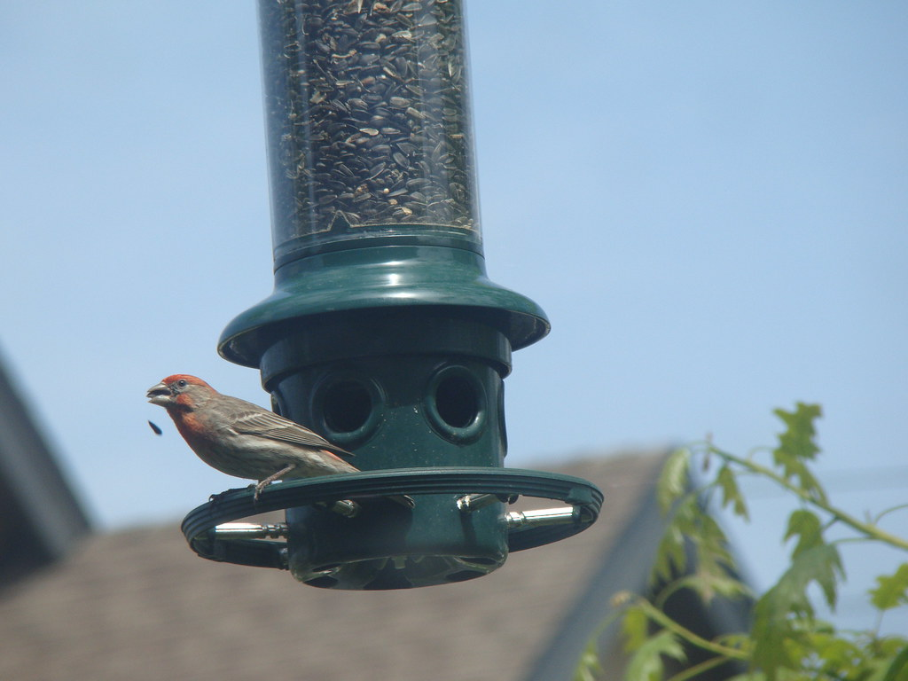 Bird at the Feeder