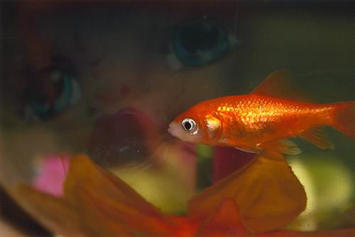 fishdoll
