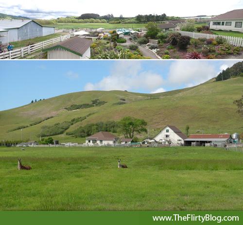 goat-pastures-llamas-harley-farms