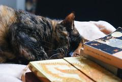 sleeping (pistazieneis) Tags: cute cat katze miez ss
