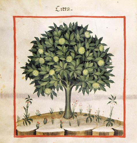 019- El limonero-TACUINUM SANITATIS- Biblioteca Casanetense Ms. 4182
