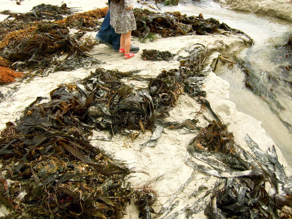 seaweed galore