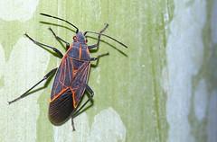Bug on Bamboo (jhhwild) Tags: bug bamboo rule thirds