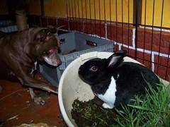 Bunny is no fun