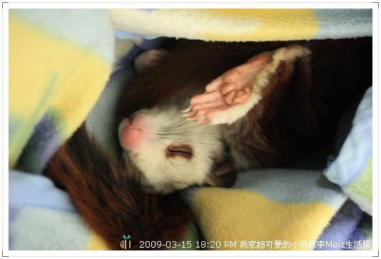 09年二三月小飛鼠Meiz生活照 (17)