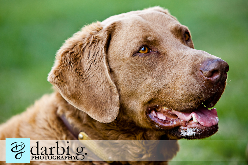 Darbi G photography-dog puppy photographer-_MG_0836-Edit