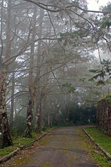 DSC06715 (Schinke) Tags: brazil brasil photo foto sony natureza harry estrada neblina danilo teresopolis a700 schinke araquem