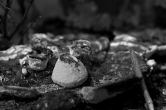 Landscape (MichaelEClarke) Tags: blackandwhite bw texture nature mushroom stone decay pebbles growth fungus twig lichen mould rotted fecund