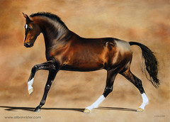 Donnersong (in colour pastel) (Ali Bannister) Tags: art painting bay pastel running grandprix otto commission stallion canter dressage mahogeny alibannister donnersong