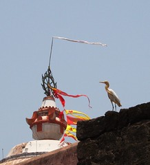 The bird & the temple (asis k. chatt) Tags: india bird capture orissa puri naturephotography naturalharmony naturewatcher