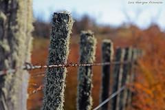 Outono (Luiz Henrique Assuno) Tags: canon ushuaia eos 40d licassuncao