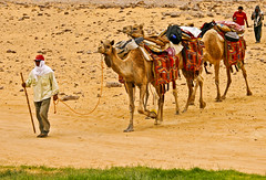 (844)camel caravan in the sahara desert / Ain Khadra / National park white desert (unicorn 81) Tags: africa travel sunset white color sahara nature animal animals trekking landscape geotagged nationalpark sand colorful desert northafrica dunes dune egypt camel egyptian colourful egipto coloured 2009 gypten animale egitto egypte reise egypten rundreise roundtrip egipt gypte mapegypt saharadesert whitedesert westerndesert misr nordafrika egypttrip libyandesert april2009 gypten camelcaravan deserttour aegyptus libyschewste unicorn81 weisewste  whitedesertnationalpark gyptusintertravel gyptenreise schulzaktivreisen saharacolors nationalparkweisewste nationalparkwhitedesert wstenreise treanim meinjahr2009