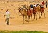 (844)camel caravan in the sahara desert / Ain Khadra / National park white desert (unicorn 81) Tags: ägypten libyandesert libyschewüste saharadesert weisewüste nationalpark desert sand africa dunes dune travel landscape egypt nationalparkwhitedesert nationalparkweisewüste whitedesert sunset westerndesert sahara white egyptian mapegypt misr schulzaktivreisen égypte ægyptusintertravel reise rundreise colourful nature trekking aegyptus 2009 saharacolors coloured camelcaravan camel egipto color colorful roundtrip april2009 egypttrip ägyptenreise northafrica nordafrika whitedesertnationalpark animals animal animale êtreanimé egypte egitto egipt egypten αίγυπτοσ ægypten meinjahr2009 geotagged deserttour wüstenreise tiere