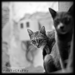 CAT STORY - EPILOGUE (Pedro Salvador) Tags: world light bw espaa cats art beauty spain nikon documentary gatos toledo belleza worldheritage documental d300 nikond300 pedrosalvador pedropablosalvadorhernndez wwwpedrosalvadores httpwwwpedrosalvadores