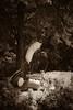 untitled (◄bl►) Tags: sculpture museum iso100 sculptuur antwerp antwerpen middelheim lightroom personalfave canoneos5d ef70200mmf4lusm 1250secatf40