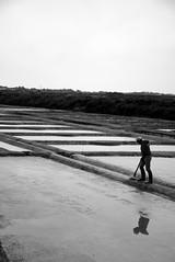 Guerande - Salt making pools (Gaetan Lee) Tags: france brittany honeymoon salt may pools making 2009 guerande