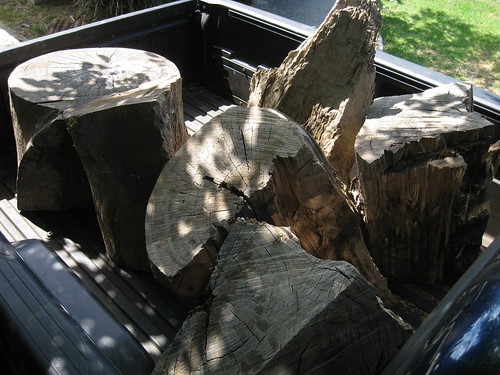 a haul of Eucalyptus logs in my truck