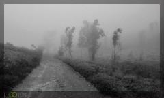 infinity (Samrat Mondal) Tags: road morning bw india plant grass fog mystery way path hills karnataka slope d40x