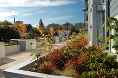 rooftop, Denny Park Apartments (via Affordable Housing Design Advisor)