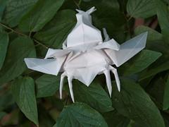 Flying Samurai Helmet Beetle (Picturs Gaxae) Tags: bug insect flying origami beetle kabutomushi junmaekawa samuraihelmetbeetle