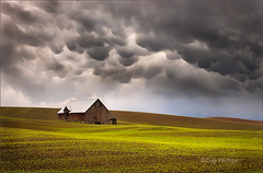 Mammatus Clouds and Barn, Palouse (Chip Phillips) Tags: green field clouds barn dark washington spring state northwest phillips stormy pasture chip inland strom palouse mammatus