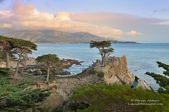 The Lone Cypress & Visitor - Pebble Beach, California