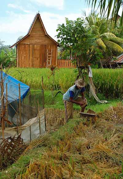 _Bali_rice_field_4_
